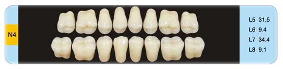 Three-layers Teeth Molar Teeth N4